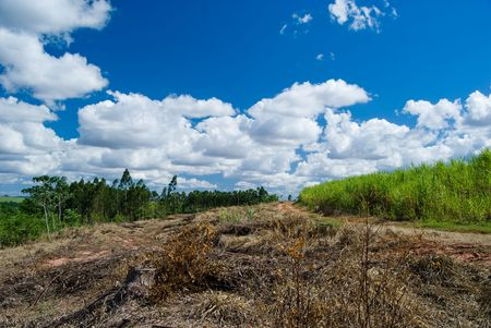 Replacement of native forest for sugarcane and eucalyptus in the south of Brazil. Today there are less than 1% of the Brazilian Atlantic forest, deforestation is the main cause of emissions of greenhouse gases in Brazil. photo