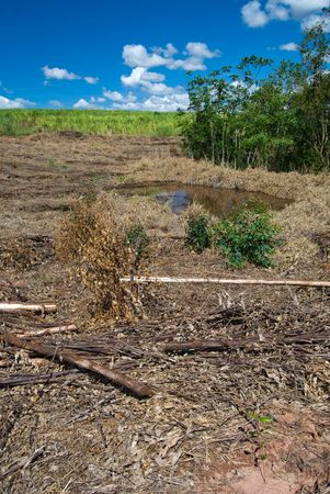 emissions: Replacement of native forest for sugarcane and eucalyptus in the south of Brazil. Today there are less than 1% of the Brazilian Atlantic forest, deforestation is the main cause of emissions of greenhouse gases in Brazil.