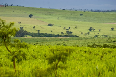 ranching: Conversion of areas of rainforest for cattle ranching and agriculture in the northwest of Paran�, southern Brazil. Stock Photo
