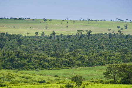 Conversion of areas of rainforest for cattle ranching and agriculture in the northwest of Paran�, southern Brazil. photo