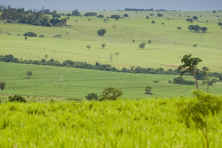 ranching: Conversion of areas of rainforest for cattle ranching and agriculture in the northwest of Paran�, southern Brazil.