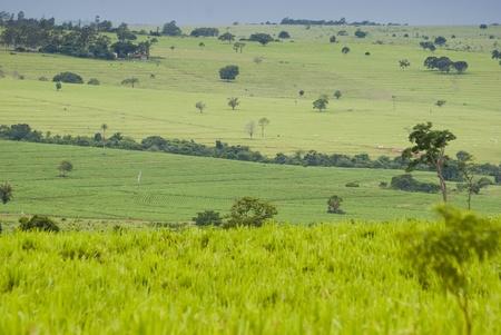 ranching: Reconversi�n de las zonas de selva tropical para la ganader�a y la agricultura en el noroeste de Paran?, sur de Brasil.