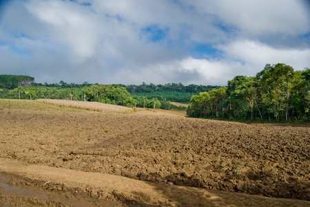 Exposed soil on forest converted to agricultural production area in southern Brazil. photo