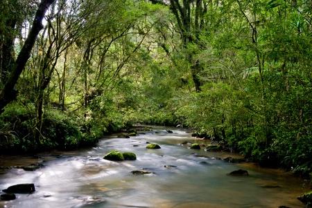 flowing river: R�o con rocas y moss en el bosque atl�ntico brasile�o. Foto de archivo