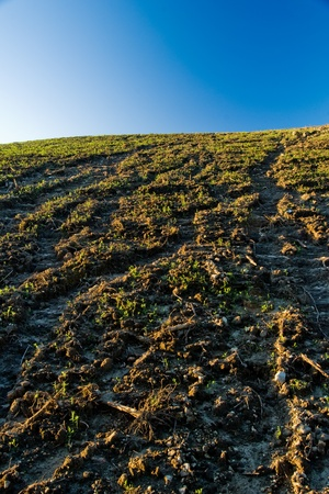 compaction: Agricultural land erosion and soil compaction in southern Brazil.
