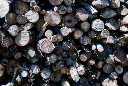 feedstock: Pile of logs of various species of rainforest trees for charcoal production. Stock Photo