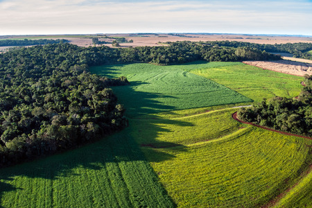 Conversion of atlantic rainforest areas into soybean fields.