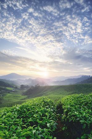 mooie ochtend tijdens zonsopgang bij theelandbouwbedrijf. groene theeboom. prachtige laag van de heuvel en dramatische wolken met blauwe lucht. (wazig en onscherp beeld)