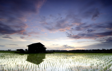 abandon: Beautiful scenery lonely abandon house in the middle of a paddy field with magical color sunrise and dramatic cloud. Soft focus and some motion blur due to long exposure. Stock Photo