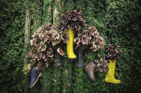 rubber boots: colorful rubber boots hanging on the stump with green leaves background