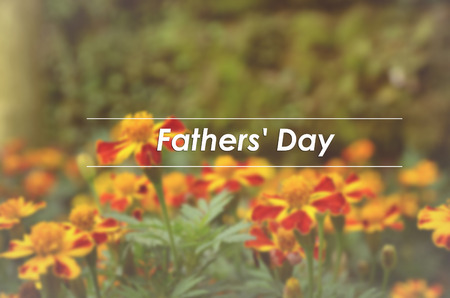 patula: blurred and classic look French marigolds (Tagetes patula) flower background with word FATHERS DAY