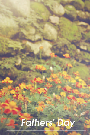 patula: blurred image and retro color look  French marigolds (Tagetes patula) flower with word FATHERS DAY Stock Photo