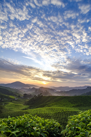 beauty nature during sunrise at Cameron Highland tea plantation,Malaysia. cloudy blue sky and sunlight ray over hill background