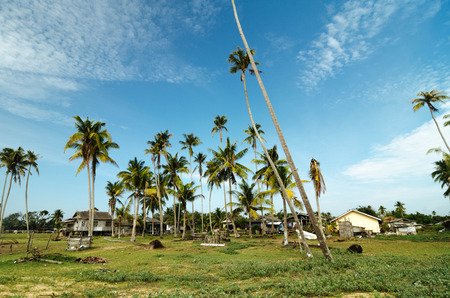 terengganu: Beautiful scenery traditional fisherman village located in Terengganu, Malaysia. wooden house surrounded by coconut tree, green grass and cloudy blue sky at sunny day.