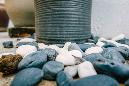 focus shot: cropped image of black and white stones over ceramic pot at garage.selective focus shot with color effect Stock Photo
