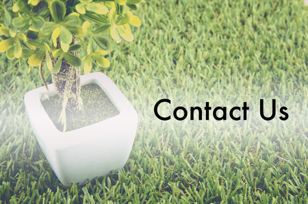 tree service: Conceptual image,customer service and support with word CONTACT US over green artificial grass and small tree on white pot. Stock Photo