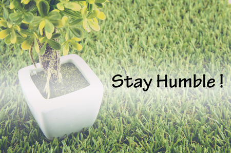 small tree: Conceptual image,customer service and support with word STAY HUMBLE over green artificial grass and small tree on white pot.