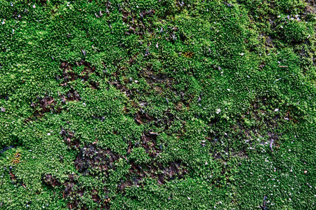focus shot: green moss on wall, ideal for background and texture effect.selective focus shot