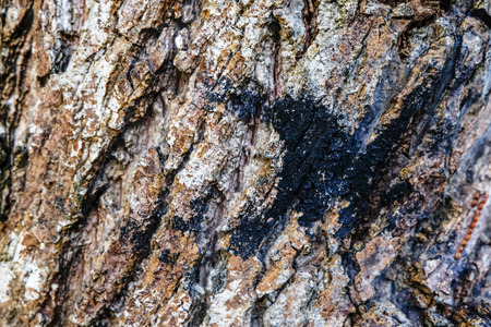 focus shot: image background, surface and texture detail of rough tree skin.selective focus shot