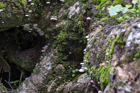 focus shot: green moss on the rock, ideal for background and texture effect.selective focus shot