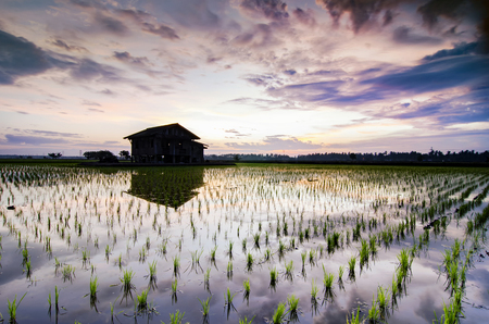 Dilapidated wooden house in the middle of paddy field over beautiful sunrise background. motion effect clouds and reflection in the water of paddy fields. long exposure and slow shutter shot