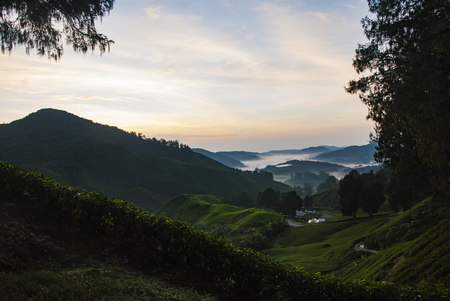 Stunning landscape scenery at early morning from hill top surrounded by tea tree, foggy mountain and sunrise background
