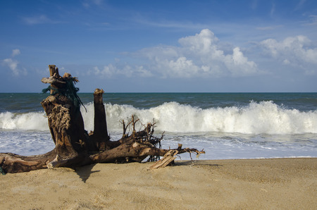 blurred and selective focus image.windy weather and strong sea waves hitting the shoreline. stranded stump on sandy beach at sunny day and cloudy blue sky background Stock Photo