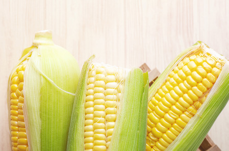 fresh raw sweet corn on the cob kernels over wooden background 写真素材