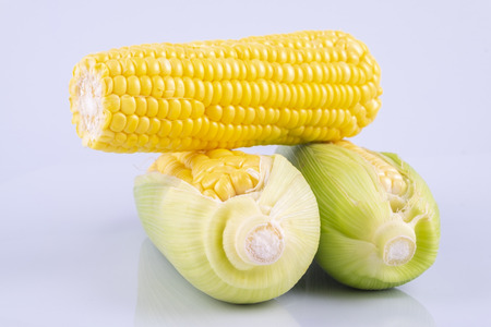 fresh raw sweet corn on the cob kernels over white background 写真素材