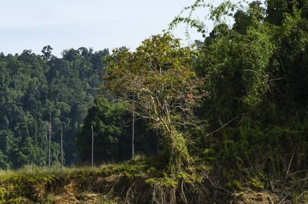 Beautiful image of rain-forest at Royal Belum State Park, Gerik Perak Malaysia. 免版税图像