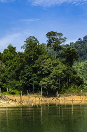 Beautiful image of rain-forest with reflection in water at Royal Belum State Park, Gerik Perak Malaysia. 免版税图像