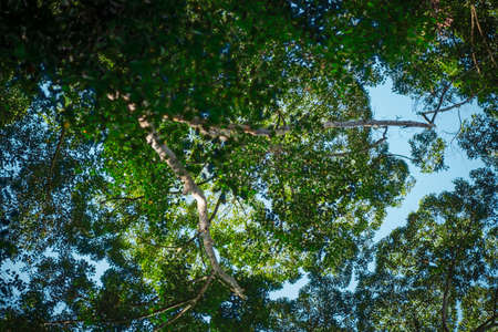Nature composition, tropical canopy tree forest under bright sunny day. selective focus shot
