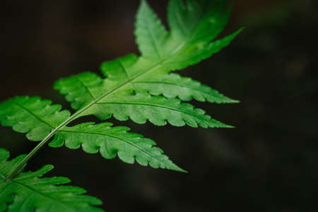 Natural closeup fern leaf agains shallow depth of field for background and environment concept