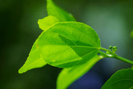Close-up pattern of fresh green leaves with shallow dept of field background