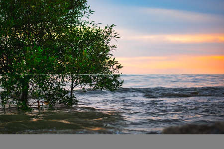 conception of solitude,a lonely tree near the beach against sunset background , wonderful natural landscape