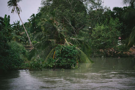 countryside senery, calm flow of a river with coconut palm tree at the riverbank
