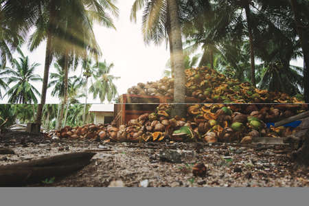 Beautiful nature landscape of Fishing village located in Terengganu, Malaysia surrounding by Coconut Palm trees