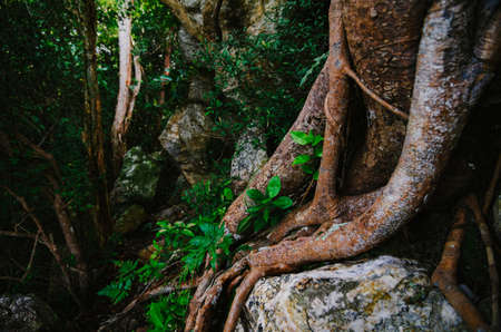 Natural closeup tropical rainforest agains shallow depth of field for background and environment concept