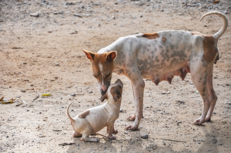 endearing: Stray mother dog  with puppy standing on ground in endearing moment  Stock Photo