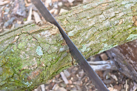 lumbering: details view of saw in the wood Stock Photo