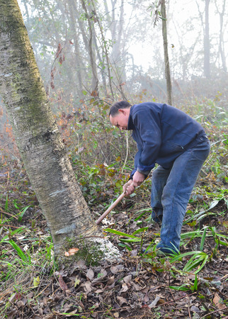 logger: MianYang, China - Feb 1, 2014: chinese logger is logging in the forest.