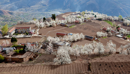 village with pear flower