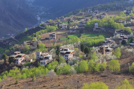 tibetan house: village with pear flower