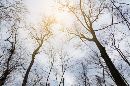 low angles: high tree branch with sky
