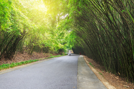 road in bamboo forest photo