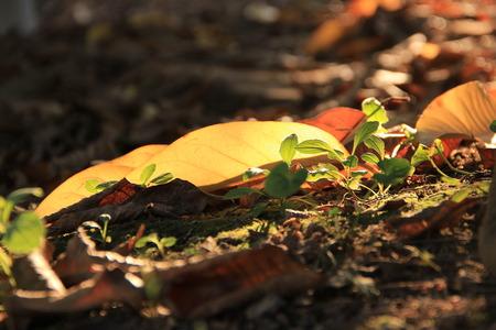 dead leaves: Dead leaves
