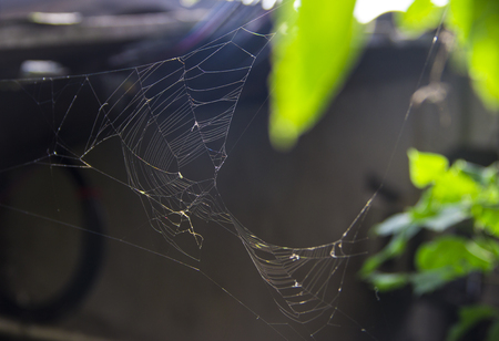 spiders web: A spiders Web Stock Photo