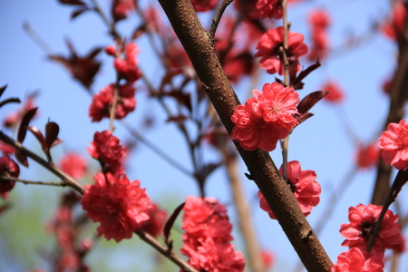 tranquillity: Flowers are all in blossom