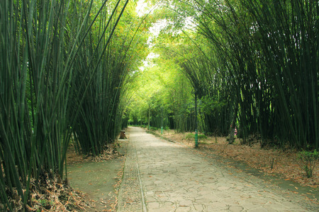 secluded: Secluded bamboo forest Stock Photo
