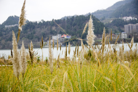canne: The reeds